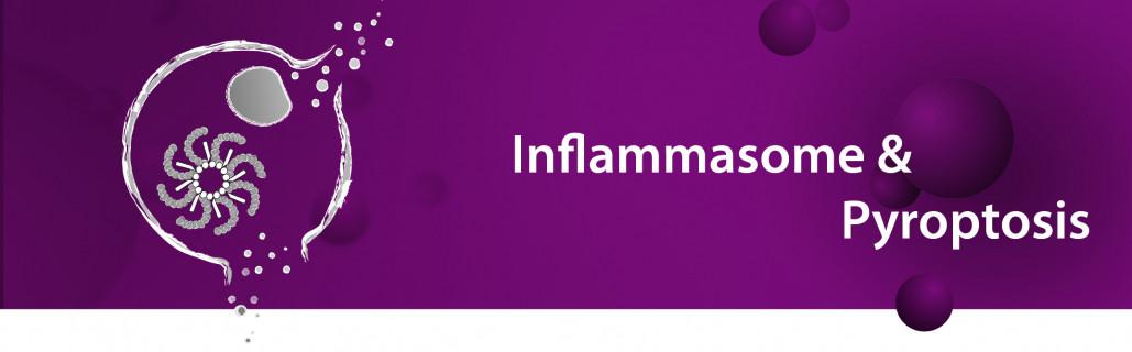 Inflammasome & Pyroptosis